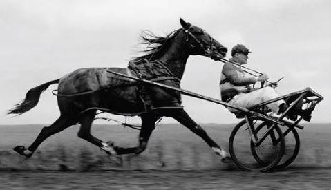 cart_before_horse.jpg?width=824&name=car
