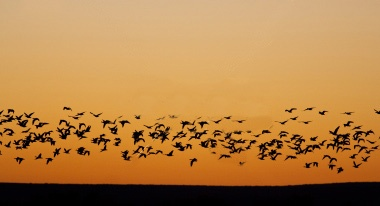 4. Streamlined Migration: